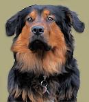 Fiete - Werkstatthund
